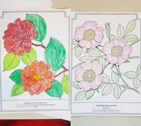 미술치료활동으로 동백꽃, 찔레꽃 도안을 색칠하고 계신 어르신들의 모습.