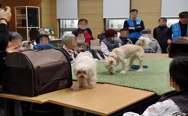 우리 환자분들께서 동물매개치료 프로그램에 참여하신 모습